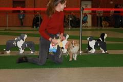 Best-Puppy-2